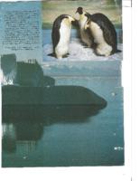 window-on-antarctica-pt-4-museum-magazine-may-1983